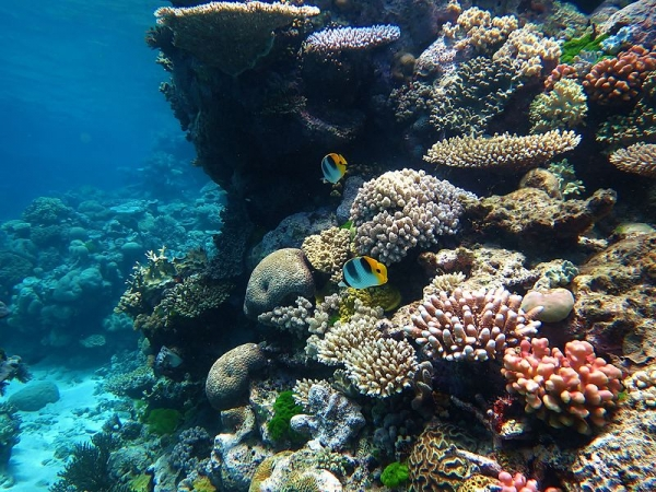 An image of the Great Barrier Reef