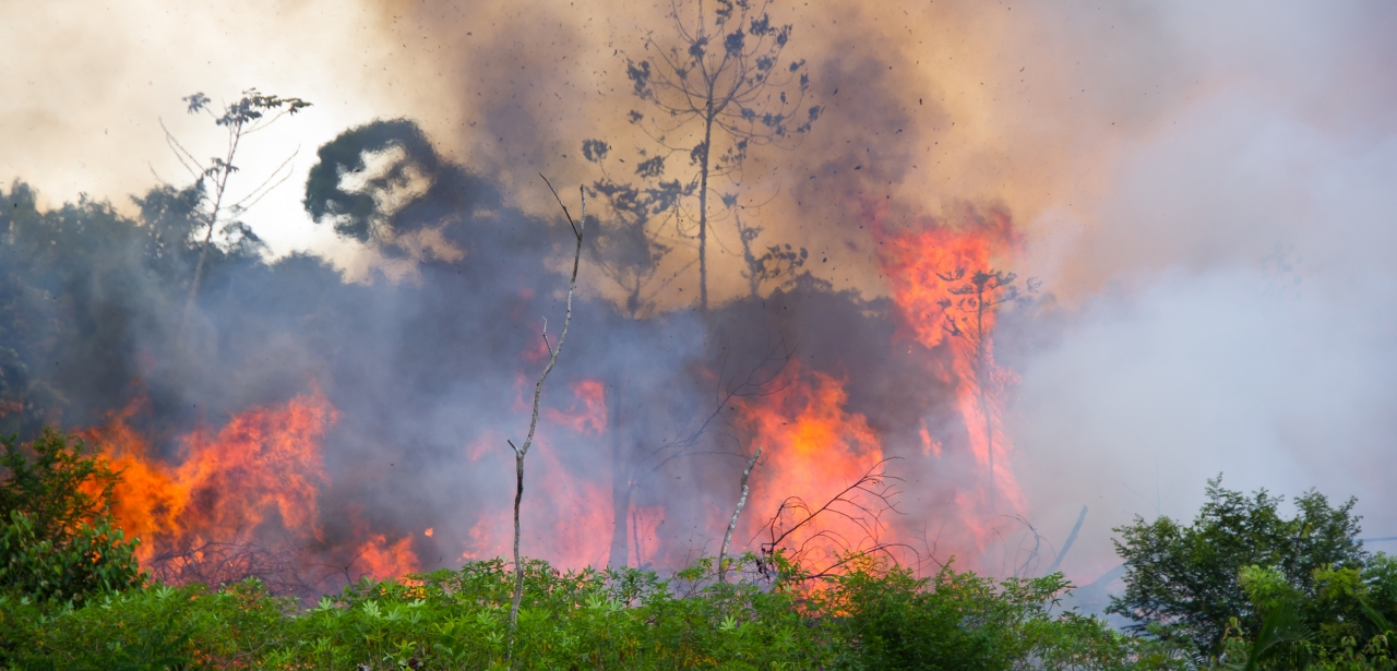 The Amazon rainforest is being intentionally burned by agrobusinesses, encouraged by the Brazilian Government