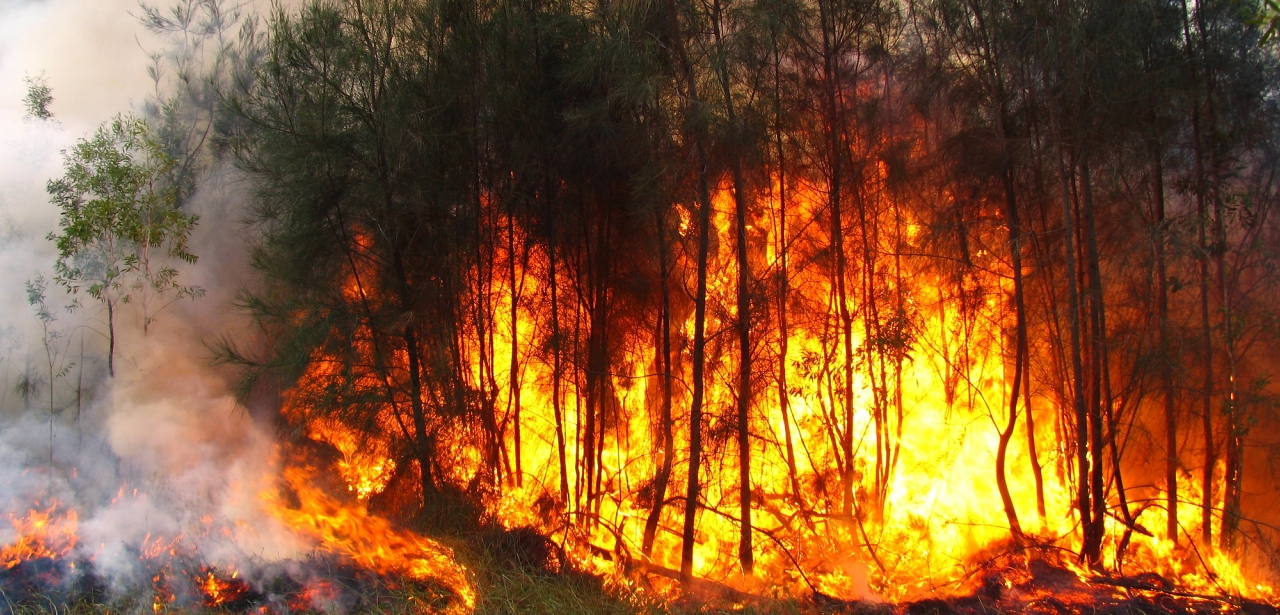 Bushfires have devastated large swathes of Australia.