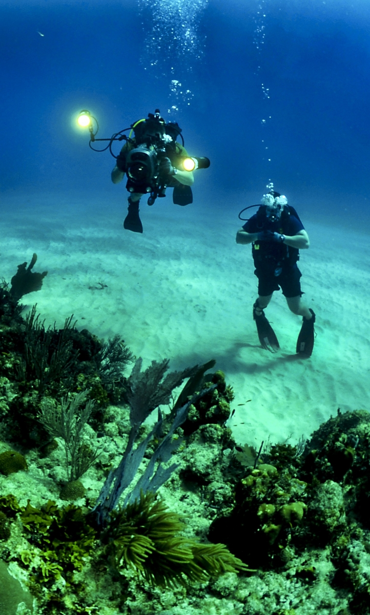 Divers explore damaged coral in the ocean