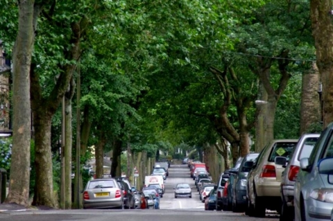 An image of Western Road trees