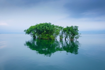 Submerged tree in Bangladesh